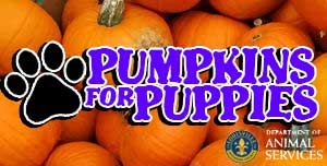 Pumpkins for Puppies
